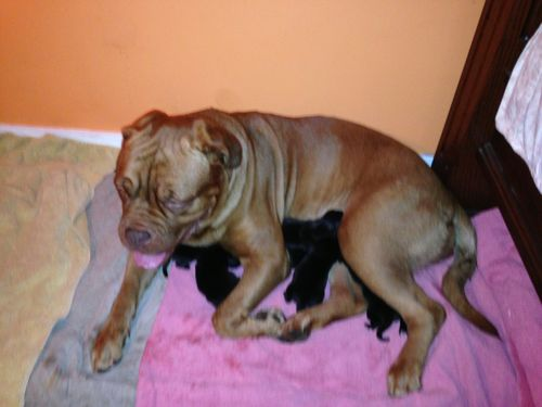 Puppies 026