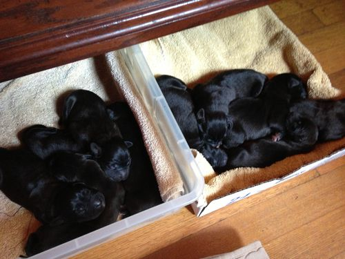 Puppies 024